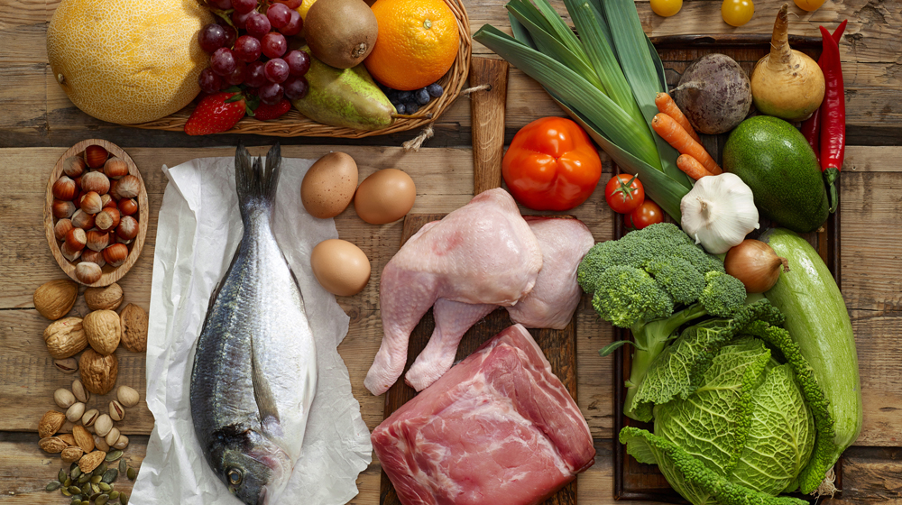 protein diet